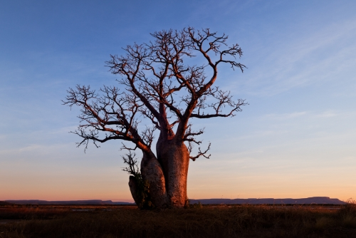 Stand Tall - Australian Landscape Photography