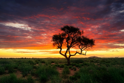 The Hakea - Australian Landscape Photography