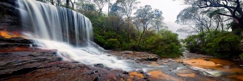 Forest Mist - Australian Landscape Photography