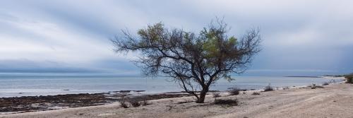 Hamelin Pool - Australian Landscape Photography